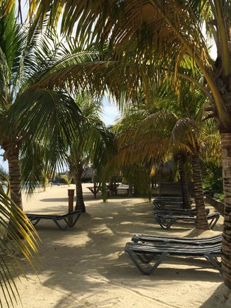 Turquoise Bay Dive & Beach Resort : Shaded beach area