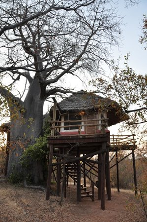 Tarangire Treetops: La chambre