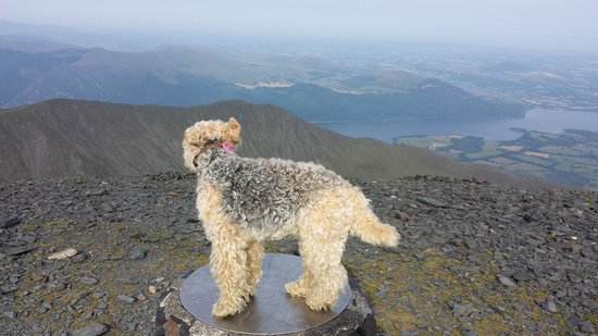 Skiddaw: maggie the lakeland at the summit