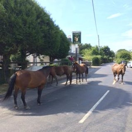 East End Arms: New Forest Ponies stop by for a pint
