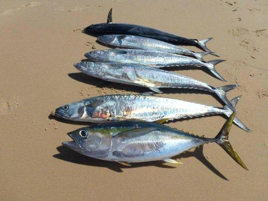 Pestana Bazaruto Lodge : Catch of the Day