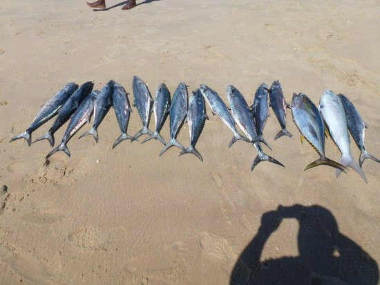 Pestana Bazaruto Lodge All Inclusive : Another catch of the day
