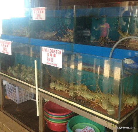 Orkid Ria Seafood Restaurant: Lobster to catch and eat
