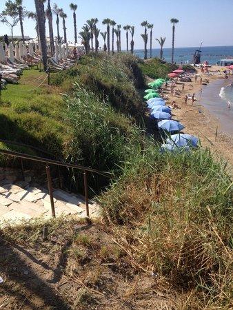 Alexander The Great Beach Hotel : Strandstrook met gekleurde paraplus van andere eigenaar