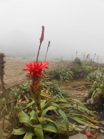La Soufriere Volcano : paysage au sommet de la soufriere