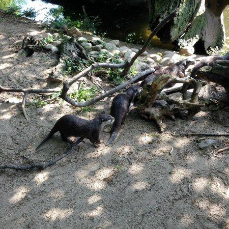Zoo Duisburg: е