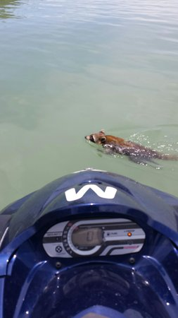 Marco Island Water Sports: You never know what you might see on our tours!