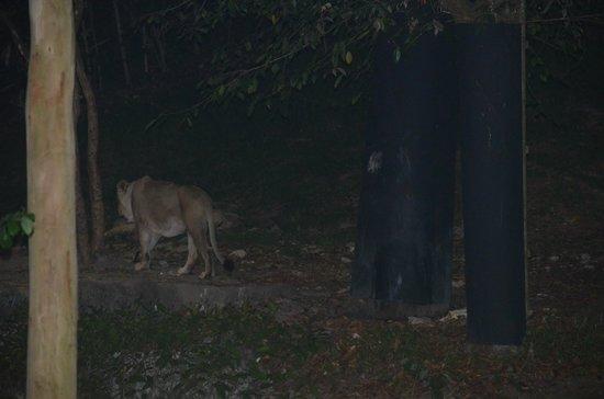 Night Safari (6)