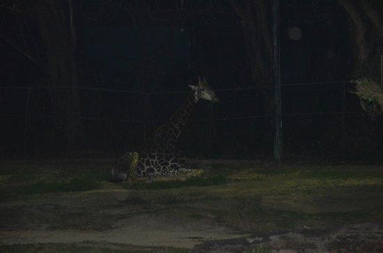 Night Safari (8)