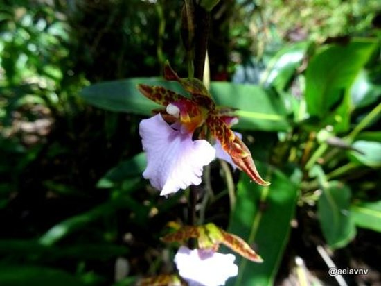 Orquideas Moxviquil: Orchid flowers