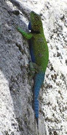 Orquideas Moxviquil: Pretty Lizard