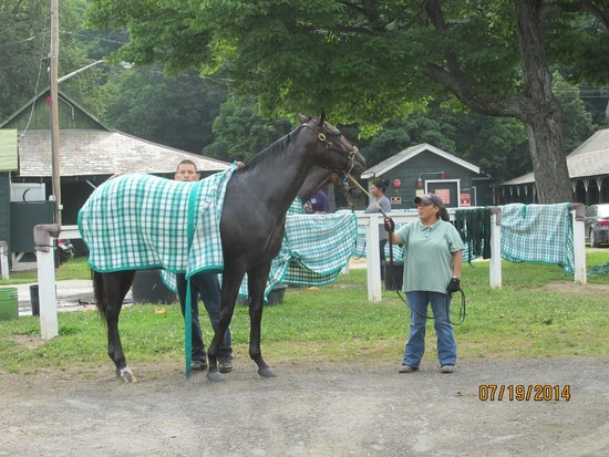 Saratoga Race Course: Horses were wrapped in blankets for warmth