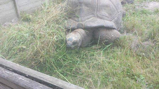 Alligator Bay : tortue