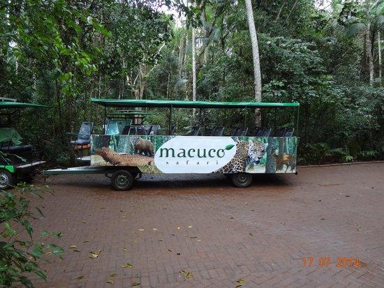 Macuco Safari: Carrinho de tranporte