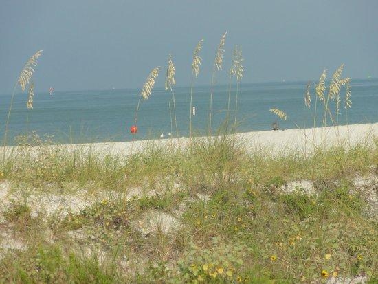 Sunset Vistas Beachfront Suites: beach