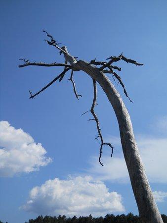 Piscia di Gallu: Albero, seccato di farlo