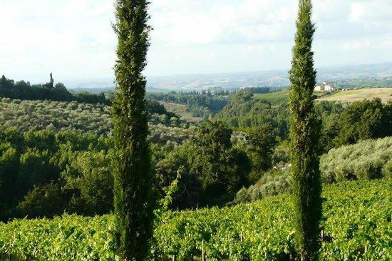 La Certaldina: Chianti-Region