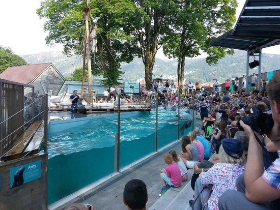 spectacle - Foto van Bergen Aquarium, Bergen - TripAdvisor