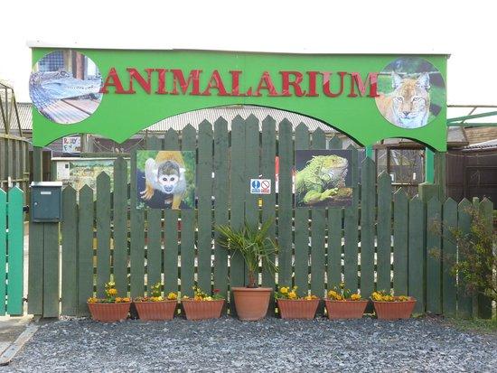 Borth Wild Animal Kingdom: Entrance