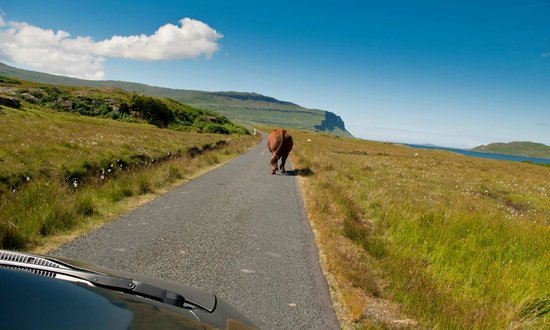 Isle of Mull Hotel & Spa: Mull traffic
