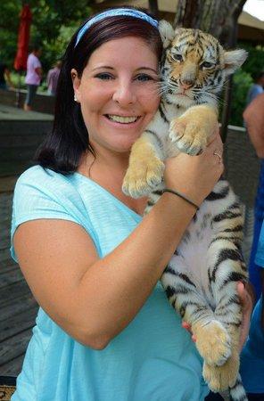 T I G E R S Preservation Station Baby Tiger Cub