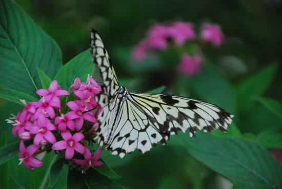 Wye Valley Butterfly Zoo: Nectar