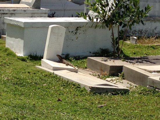 Key West Cemetery: Lizard hanging out