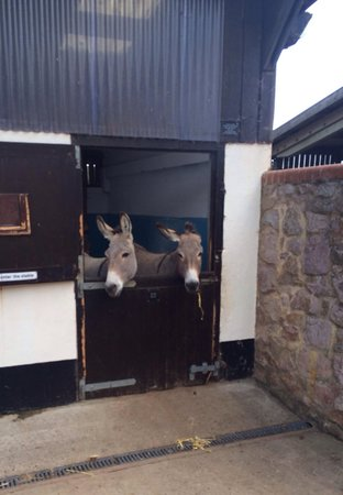 The Donkey Sanctuary: Cute twins