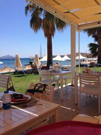 Cocos The Club: Il ristorante