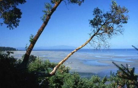Beach Club Resort: Parksville Beach