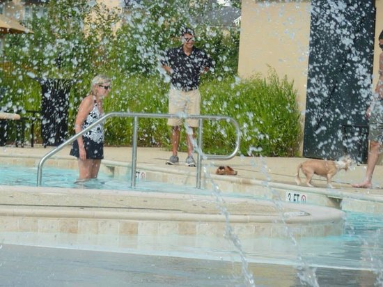 Salamander Resort & Spa: Dog being allowed to swim in the pool and got out dripping wet!