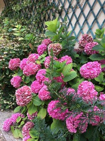 Le Clos Fleuri: Les Hortensias