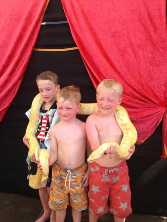 Club MAC Alcudia: the Reptile Show