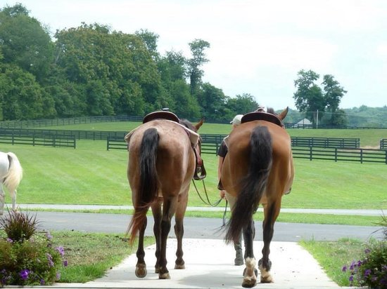 Salamander Resort & Spa: Beautiful horses