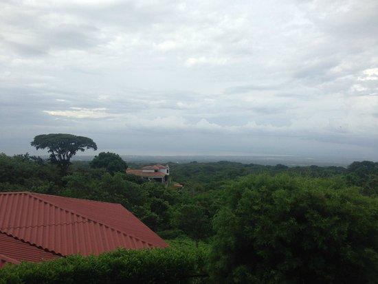 Intermezzo del Bosque: One of the view