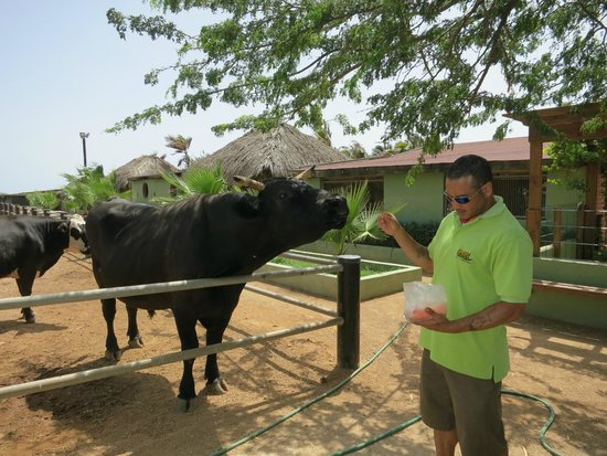 Philip's Animal Garden: Learning how to feed the cows