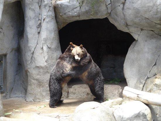 from Denver gay bears san diego ca