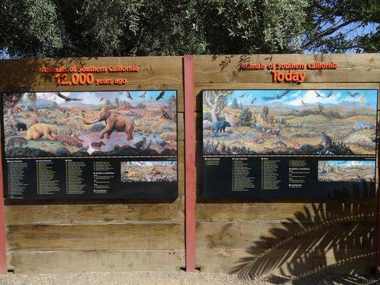 San Diego Zoo : Animals of southern California