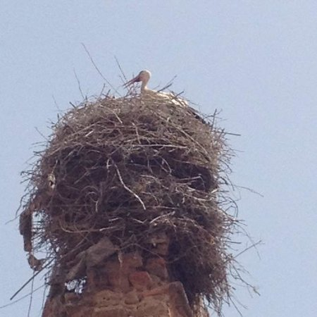 Riad Al Warda: Cranes! In town!