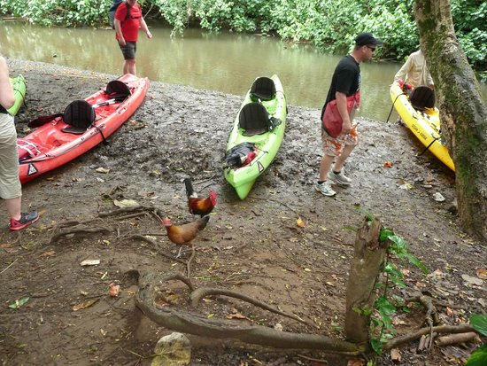Wailua Kayak Adventures : Time to leave the kayaks for the muddy trail
