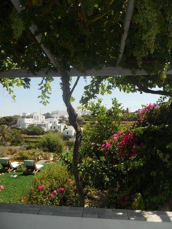 Myrto Bungalow Hotel: Garden from terrace