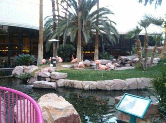 Flamingo Las Vegas Hotel & Casino: Flamingo Habitat