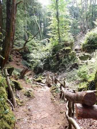 Puzzlewood: tracking trails