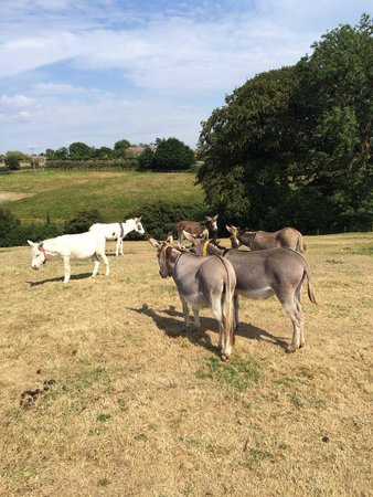 The Donkey Sanctuary: Acres of land for the donkeys to play in