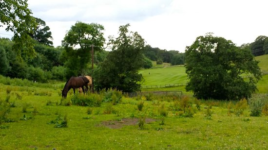 Dalmahoy Hotel & Country Club: Horses grazing in hotel grounds