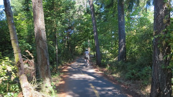 Cycle Treks - Day Tours: Trail through the woods
