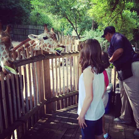 Zoo Atlanta: Giraffe Feeding Station