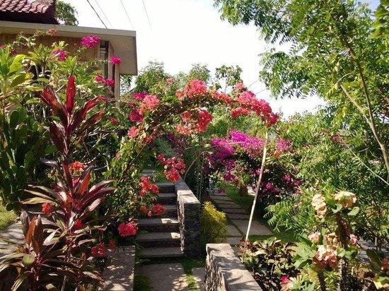 Paradise Bungalows Bali : территория отельчика очень уютная