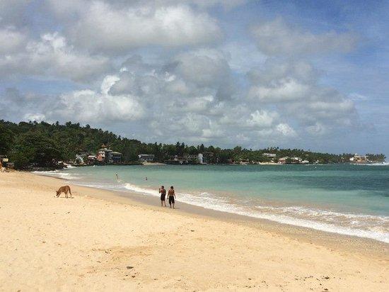 Palm Grove: Unawatuna Beach