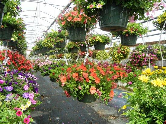 Bauman's Farm and Garden